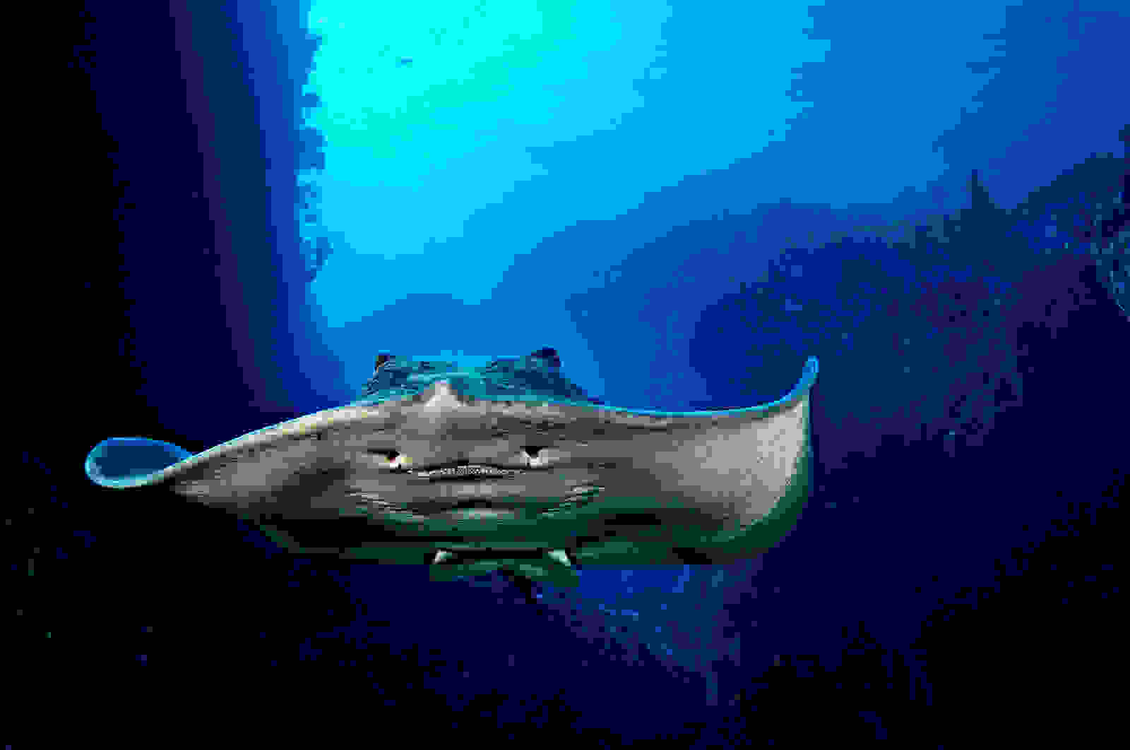 Stingray-In-Canyon.jpg