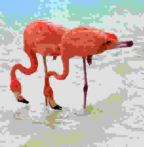 δίδυμα ζώα