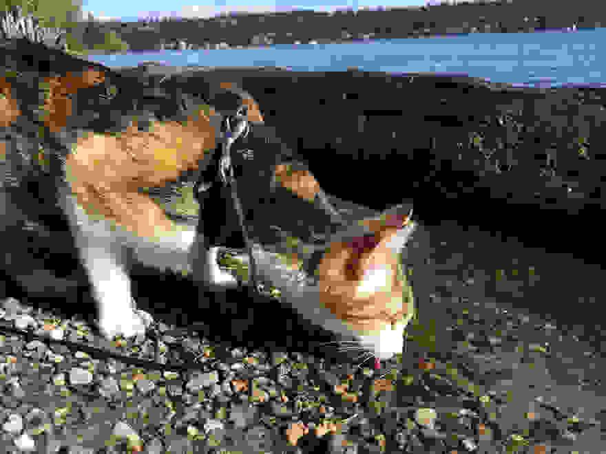 τυφλή γάτα Γάτα