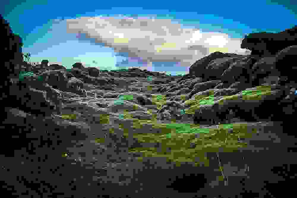mossy10.jpg