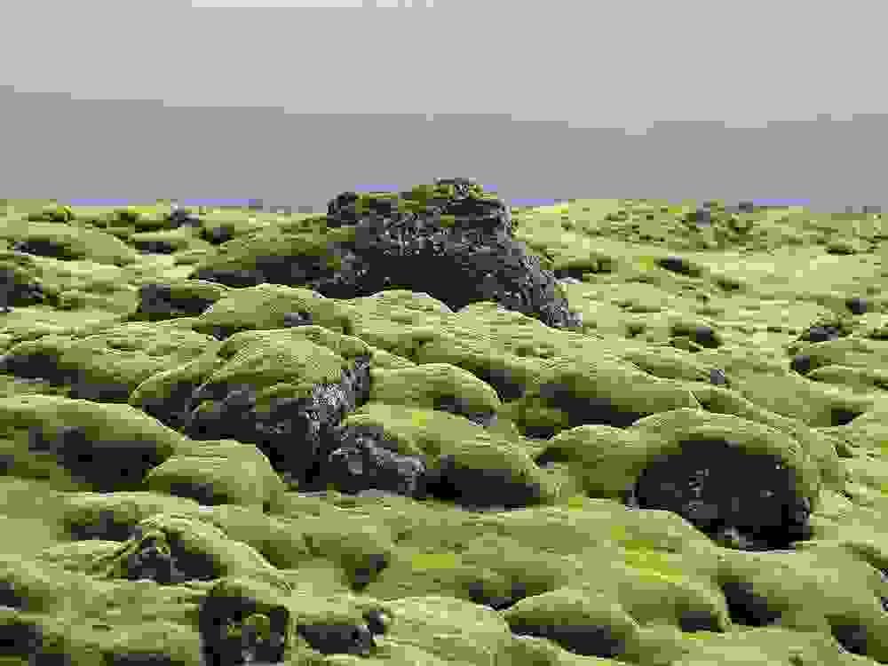 mossy3.jpg