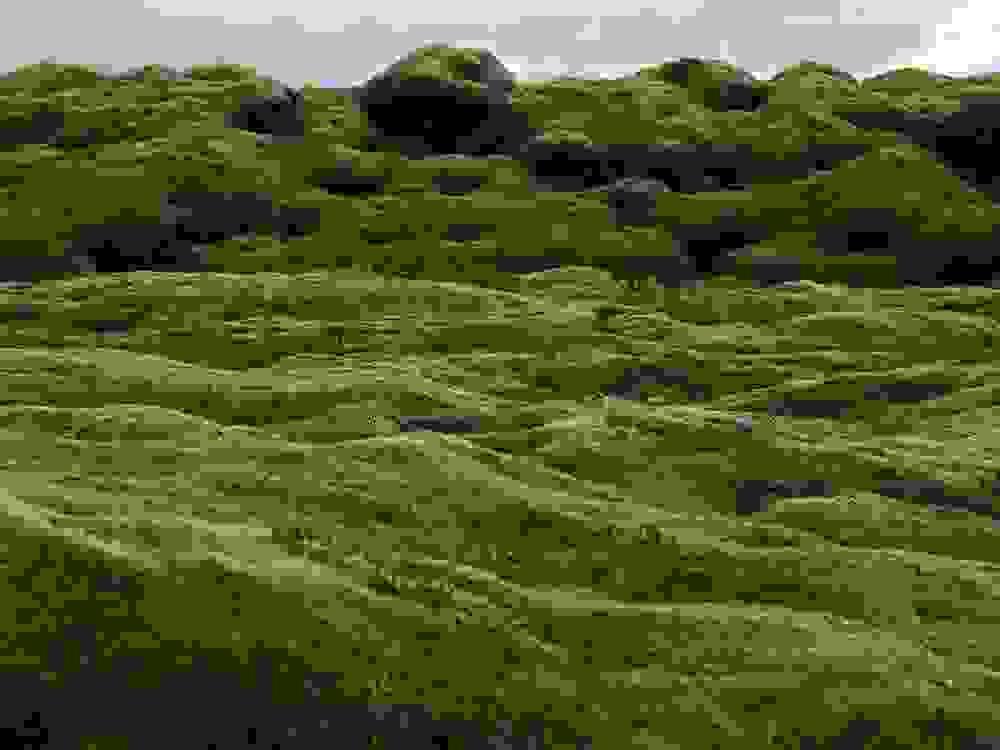 mossy5.jpg