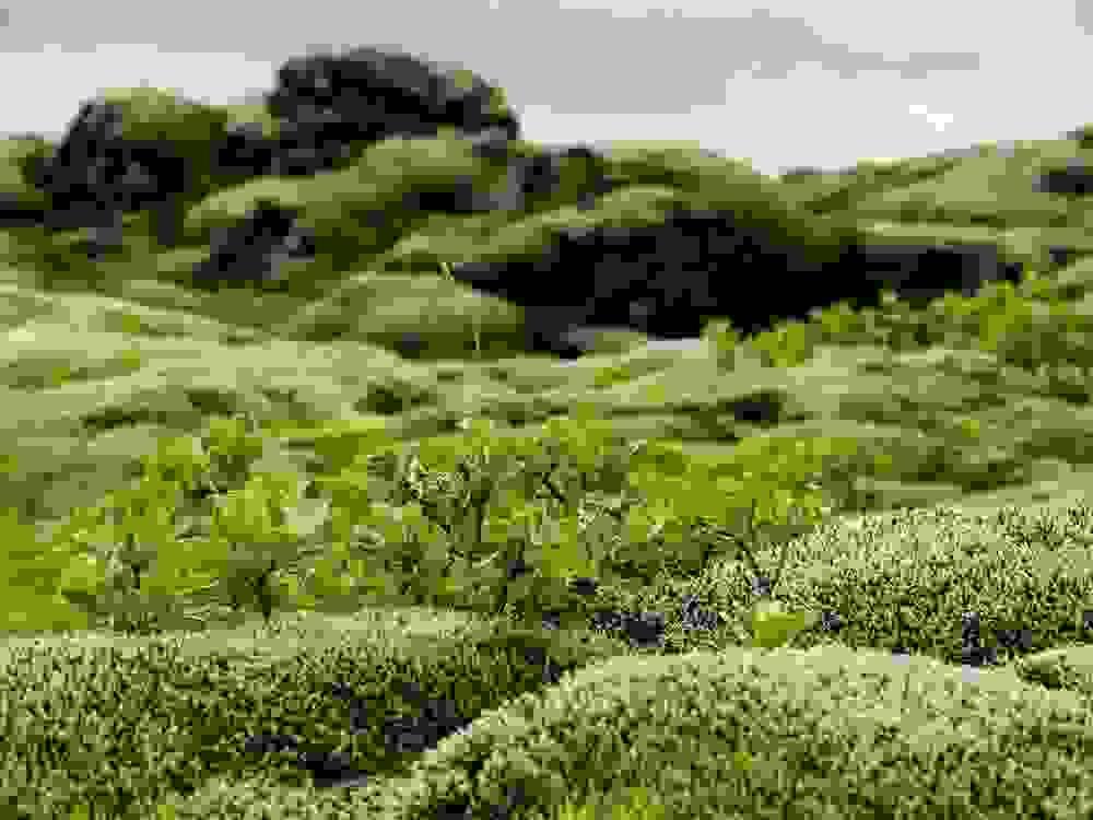 mossy7.jpg