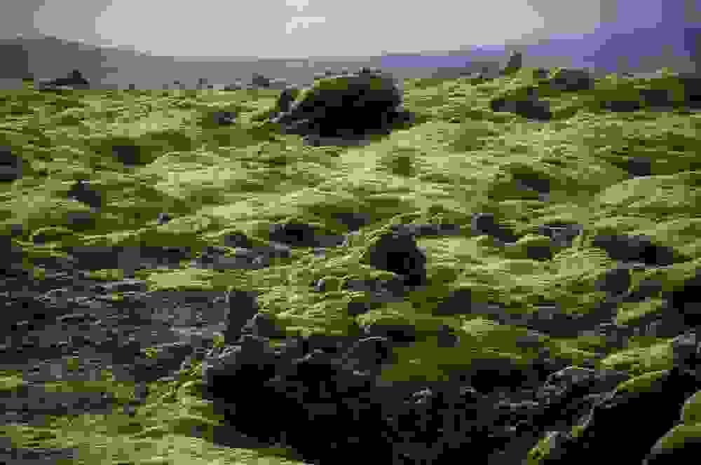 mossy8.jpg