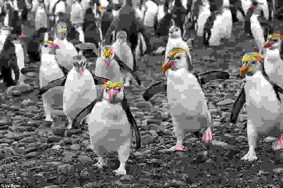 o-paradeisos-ton-pigkouinon9.jpg