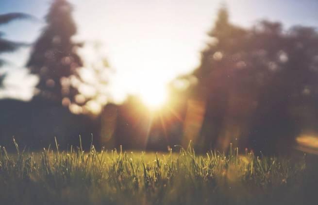 Tom Robbins - Τη μέρα που η γη έφτυσε αγριογούρουνα