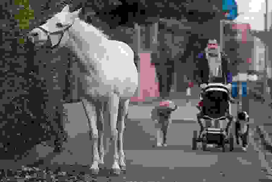 horse.4.jpg