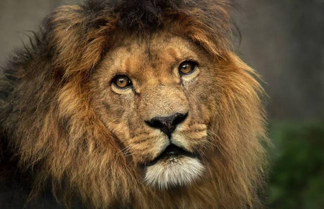 Αμβρόσιος Μπιρς - Το λιοντάρι και ο κροταλίας