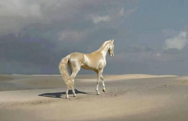 Akhal-Teke. To «χρυσό» άλογο